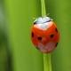 انگلیسی مربوط به حشرات